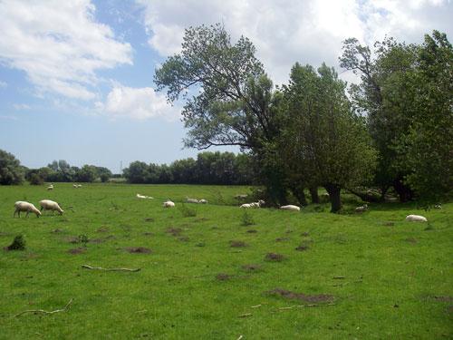San-Clement-cemetery-1.jpg